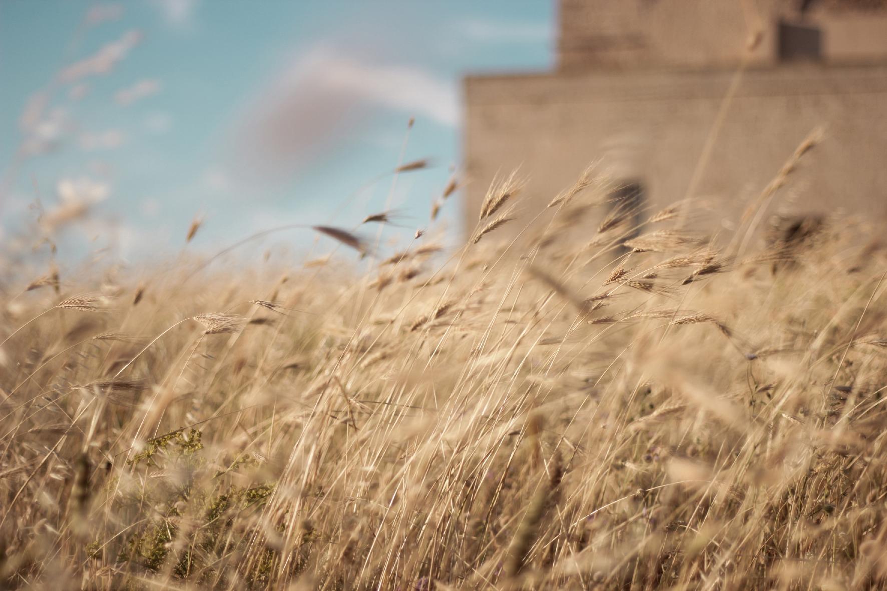 TORRE_GUACETO_1